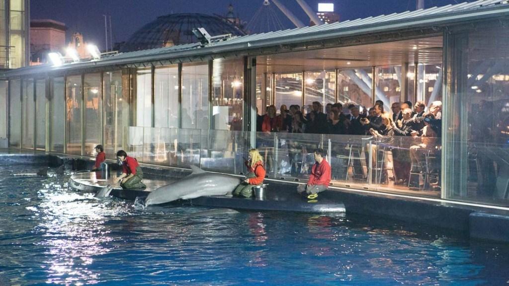 Acquario di Genova evento aziendale cena con vista sulla vasca dei delfini