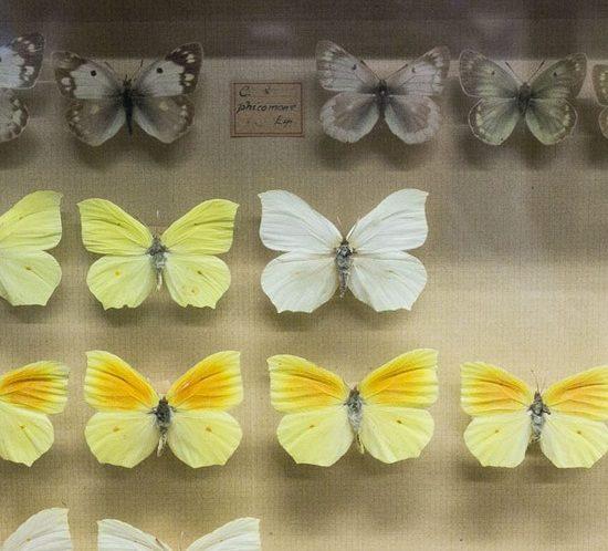 Museo di Storia Naturale Business
