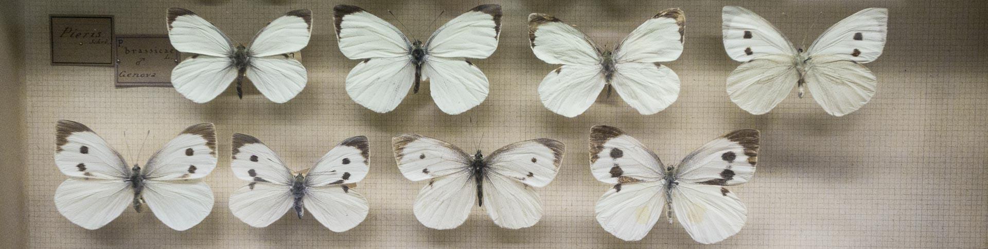 Museo di storia naturale